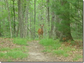 Friendly deer near shelter